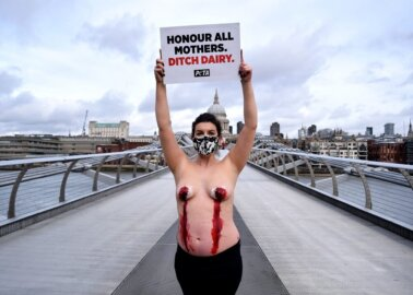 Pregnant PETA Supporter's Nipples 'Bleed' in Dairy Industry Protest