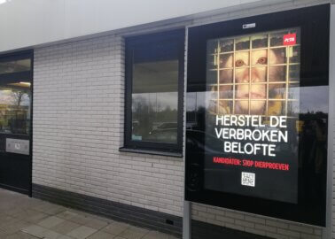 Time to End Tests on Animals: New Ads Put Pressure on Dutch Politicians