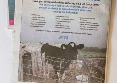 Full-Page Ad Seeks Dairy Industry Whistle-Blowers