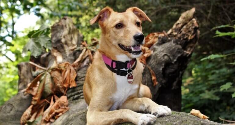 A dog wearing a collar