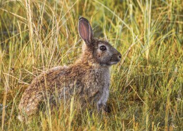Victory! Cornwall Council Rejects Rabbit Farm
