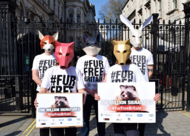 1 Million Petition Signatures Have Been Submitted to 10 Downing Street Calling For a #FurFreeBritain