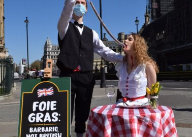 Woman 'Force-Fed' Through Tube in PETA Foie Gras Protest