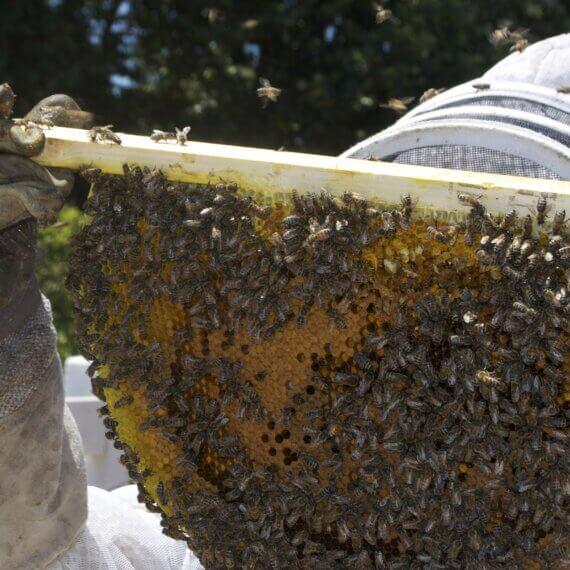 This Is Why Honey Isn't Vegan