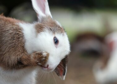 PETA Answers Your Questions on Animal Testing for Cosmetics