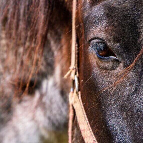 Take to Twitter: Tell Companies Sponsoring the Grand National to Stop