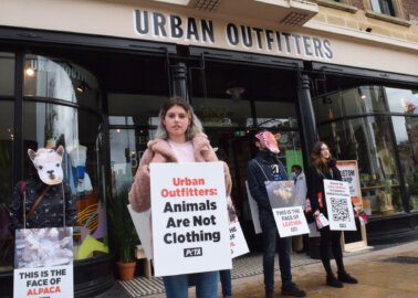 Why Did PETA Supporters Protest at Cambridge's New Urban Outfitters Store?