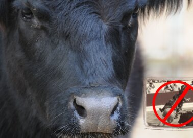 Great News! Portuguese Public Television Will Not Air Bullfights This Year