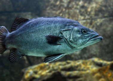 'Fish Can't Feel Pain' Doesn't Hold Water