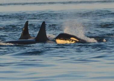 Your Co-op Travel Pulls Plug on SeaWorld Ticket Sales