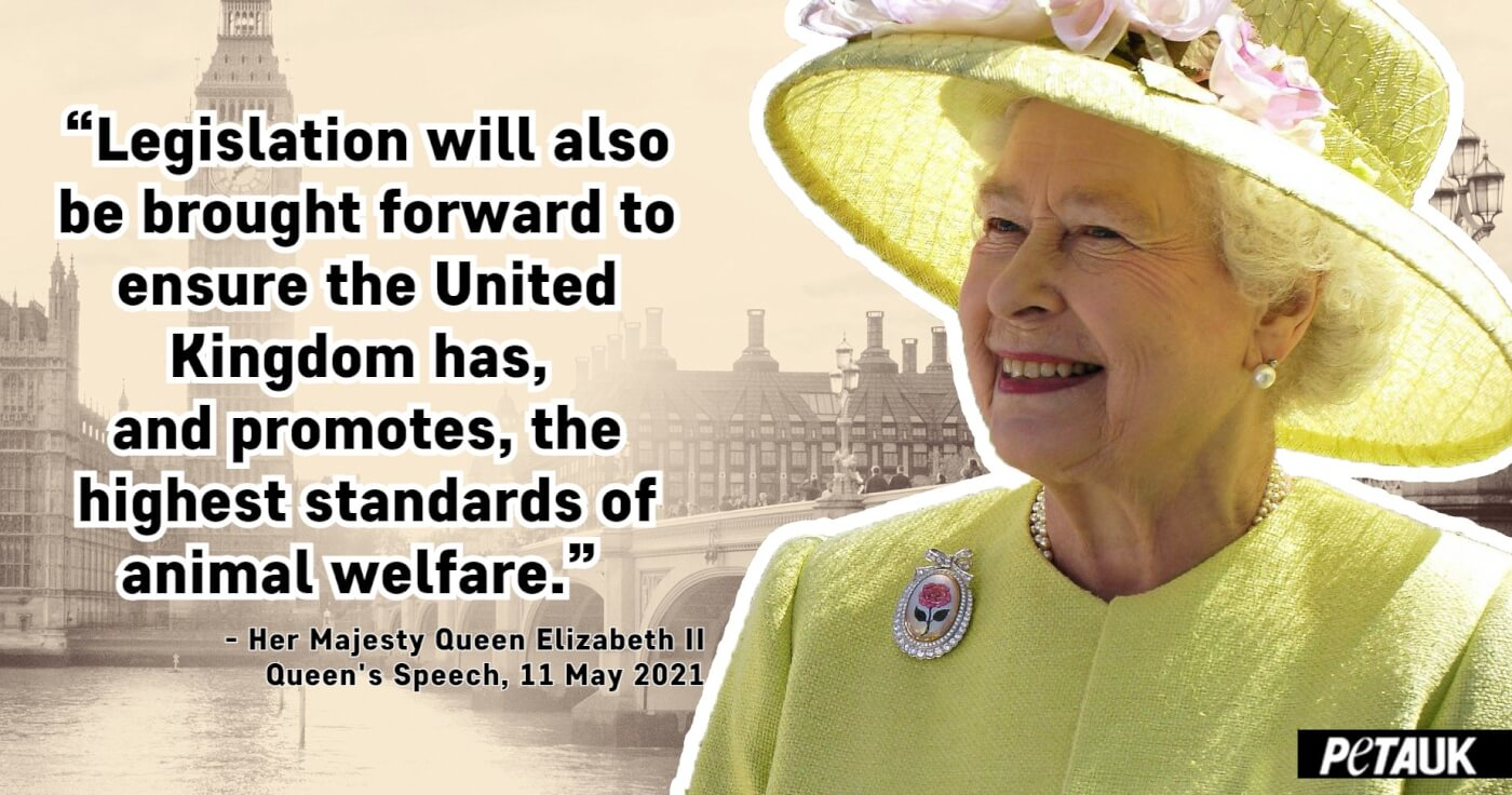 """Image of Queen with quote: """"Legislation will be brought forward to ensure the United Kingdom has, and promotes, the highest standards of animal welfare."""""""
