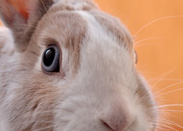Exciting News! TRESemmé Bans All Animal Testing Worldwide