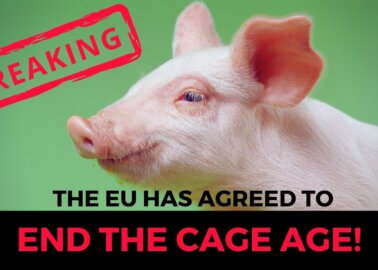 History in the Making! European Commission Commits to Banning Cages for Animals on Farms