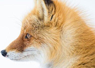 BREAKING: Israel Bans Fur, Making History for Animals