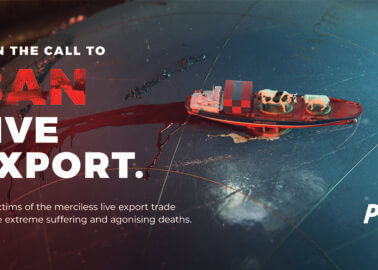 New PETA Billboard Goes Up to Bring Live Exports Down