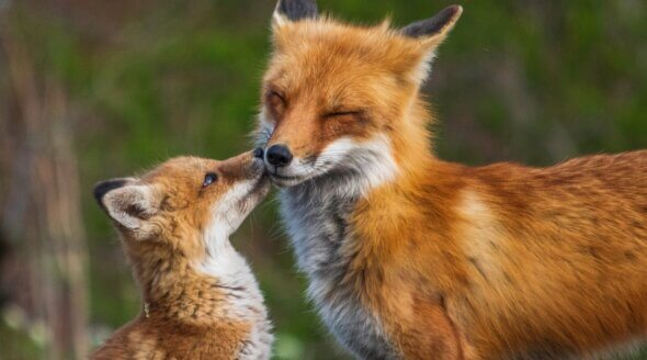 Estonia to Become the First Baltic Country to Ban Fur Farming