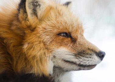 PETA Celebrates Fur-Free 'Vogue Scandinavia'
