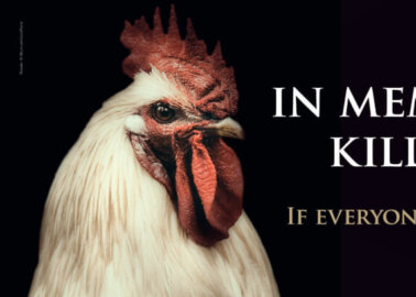 Memorial Billboard to Pay Tribute to 50,000 Chickens Killed in Driffield Fire