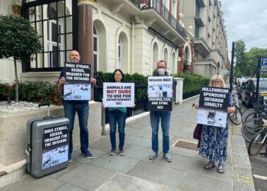PETA Supporters Slam Millennium Hotels in London and Rome Over Sponsorship of Cruel Dog-Sled Race