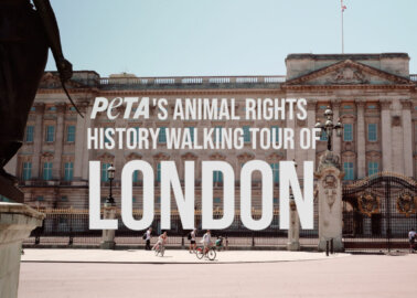 WATCH: An Animal Rights Tour of London