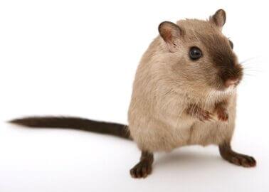 Global Progress Made as Skin Allergy Tests Go Animal-Free