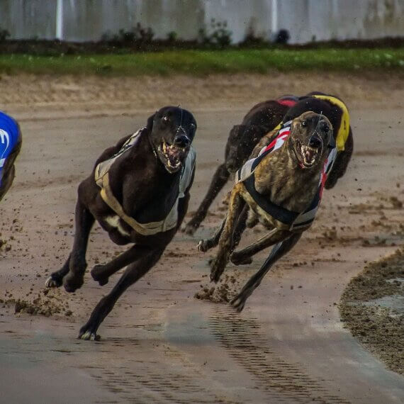 Stop Plans for Greyhound Racing at Oxford Stadium