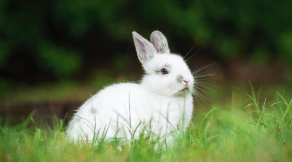 Great News for Rabbits! Valentino Bans Angora After Talks With PETA