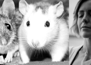 Tests on Animals Say Little About the Effects of Chemicals on Human Hormones