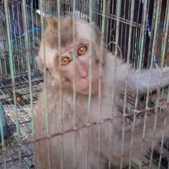 Exposé: Suffering and Disease in Asian Live-Animal Markets