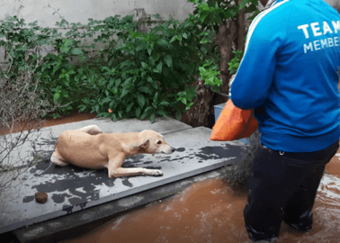 BREAKING: Saving Animals From Rising Floodwaters | Animal Rahat