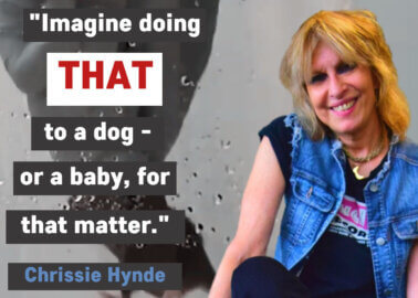 Chrissie Hynde 'Horrified' by University of Edinburgh's Near-Drowning of Animals