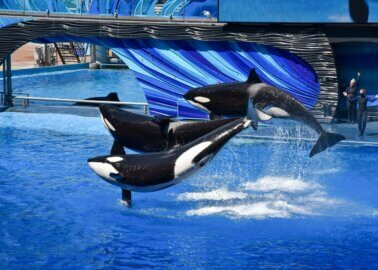 Will the UK's Largest Travel Association Discourage Orca Abuse?