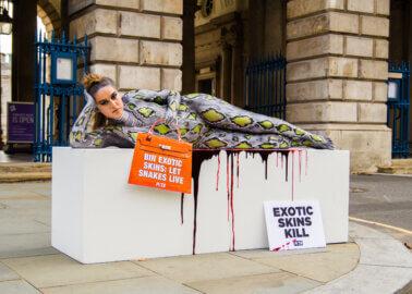 London Fashion Week – Chloe Ross 'Dies' for a 'Snakeskin' Bag