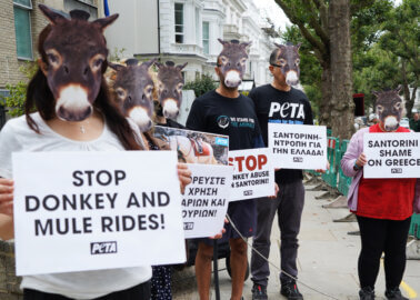 PETA Protesters Demand an End to Greece's Animal 'Taxis' at Embassy