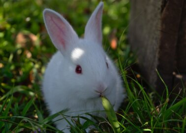 Victory! Derbyshire Dales District Council Rejects Rabbit-Butchering Facility