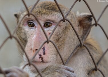 PETA Urges MPs to Support a Ban on Animal Testing